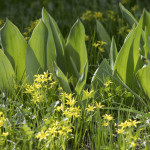Весна в обители князя Даниила | Московский Данилов монастырь